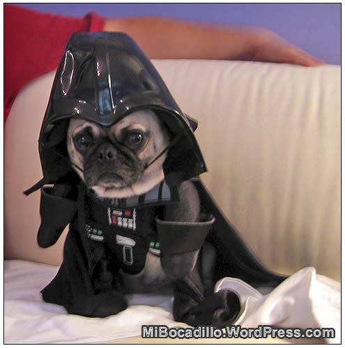 Luke... soy tu perro